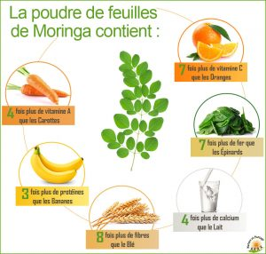 composition du moringa
