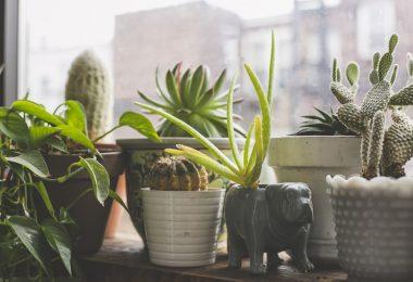 meilleures plantes d'intérieur