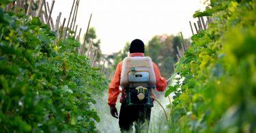 pesticides légumes